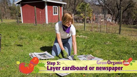lasagna gardening newspaper cardboard