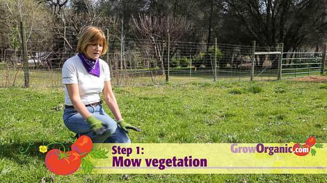 lasagna gardening mow lawn