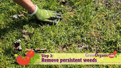 lasagna gardening weed