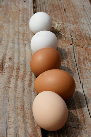 Fresh eggs, benefits of chickens