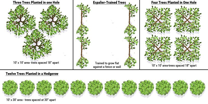 high density planting diagram